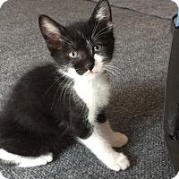 Adopt A Pet :: Martin - Colorado Springs, CO
