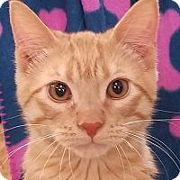 Adopt A Pet :: Blazer - Colfax, IA
