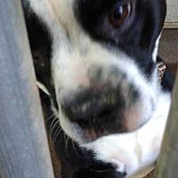 Adopt A Pet :: Bose - Disney, OK