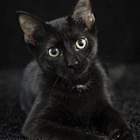 Adopt A Pet :: Thing 1 - Gainesville, FL