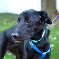 Adopt A Pet :: Jagger - Silver Spring, MD