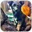 Photo 2 - Labrador Retriever Mix Puppy for adoption in Wasilla, Alaska - Coda