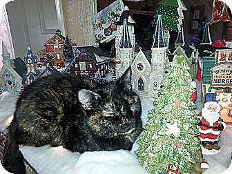 Domestic Shorthair Cat for adoption in Harrisburg, North Carolina - Lizzy