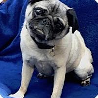 Adopt A Pet :: Hef - San Francisco, CA
