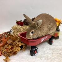 Adopt A Pet :: Roxy - Dayton, OH