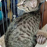 Adopt A Pet :: Chloe - McCormick, SC
