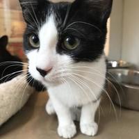 Adopt A Pet :: 36053427 - Land O'Lakes, FL