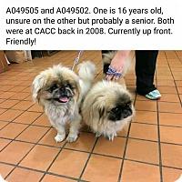Adopt A Pet :: Yogi & Yoshi - Inver Grove, MN