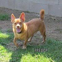 Adopt A Pet :: Freddy - Lindsay, CA