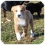Photo 1 - Labrador Retriever Mix Puppy for adoption in Portland, Maine - When