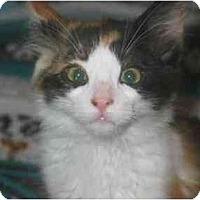 Adopt A Pet :: Spunky - Davis, CA