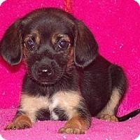 Adopt A Pet :: Suri - Phillips, WI