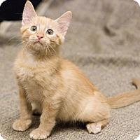 Adopt A Pet :: Pedro - Chicago, IL