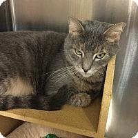 Adopt A Pet :: Bo -Adoption Pending! - Colmar, PA