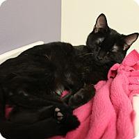 Adopt A Pet :: Brian - Medina, OH