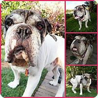 Adopt A Pet :: Byron - Inverness, FL