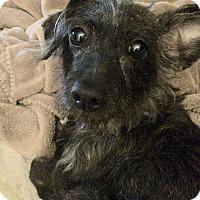 Adopt A Pet :: Lola - Raritan, NJ
