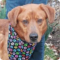 Adopt A Pet :: Palmer-PENDING - Garfield Heights, OH