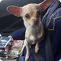 Adopt A Pet :: Lil Girl - Omaha, NE