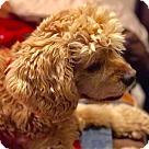 Adopt A Pet :: Cody