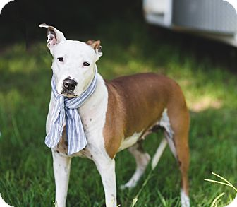 Whippet Mix Dog for adoption in Fort Valley, Georgia - Greta