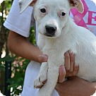 Adopt A Pet :: April