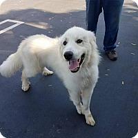 Adopt A Pet :: Dopey - Long Beach, CA
