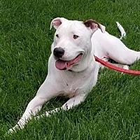 Adopt A Pet :: Augusta - DeSoto, IA