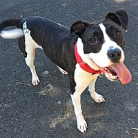 Adopt A Pet :: RAVEN - Newport, OR
