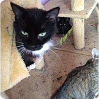 Adopt A Pet :: Louisiana - Mobile, AL