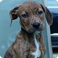 Adopt A Pet :: Jenna - South Jersey, NJ