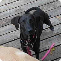 Adopt A Pet :: Joan Jett - Rockaway, NJ