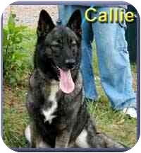 German Shepherd Dog/Collie Mix Dog for adoption in Aldie, Virginia - Callie