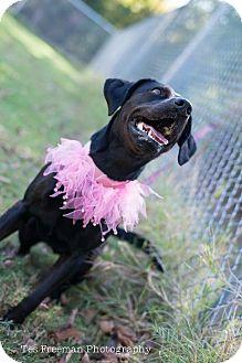 Labrador Retriever Mix Dog for adoption in Muldrow, Oklahoma - Bianca