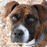 Adopt A Pet :: Tristy - McCormick, SC