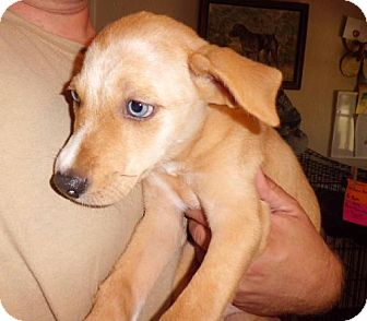 Catahoula Leopard Dog Mix Dog for adoption in Lavon, Texas - Sapphire