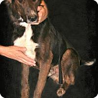 Adopt A Pet :: Kosmo - Lufkin, TX