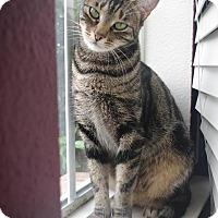 Adopt A Pet :: Ariel - Roanoke, TX