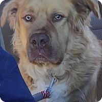 Adopt A Pet :: Tanner - Adoption Pending - Murrells Inlet, SC