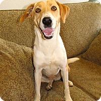 Adopt A Pet :: Pickles - East Hartford, CT