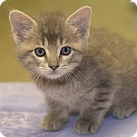 Adopt A Pet :: Joshua - Medina, OH