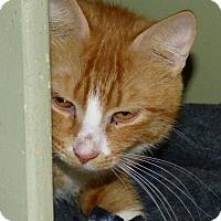 Adopt A Pet :: Serenity - Logan, UT