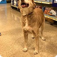 Adopt A Pet :: Kya - Darien, GA