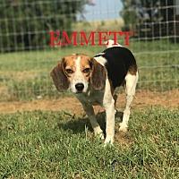 Adopt A Pet :: EMMETT - Ventnor City, NJ