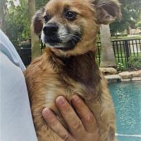 Adopt A Pet :: Hero - conroe, TX