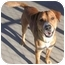 Photo 2 - Retriever (Unknown Type) Mix Dog for adoption in Phoenix, Oregon - Chance