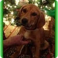 Adopt A Pet :: Daisy - Staunton, VA