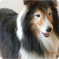 Adopt A Pet :: buddy - apache junction, AZ