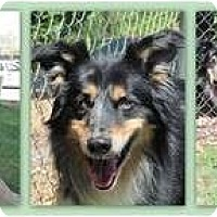 Adopt A Pet :: Maya - Trabuco Canyon, CA