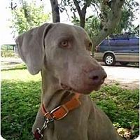 Adopt A Pet :: Naples  **ADOPTED** - Eustis, FL